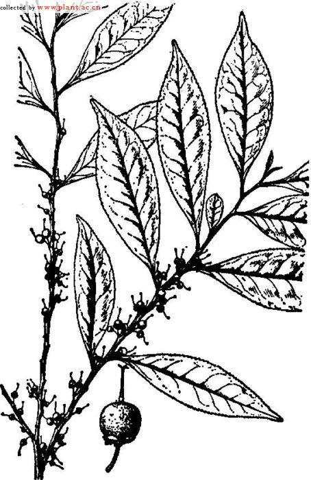 简笔画 设计 矢量 矢量图 手绘 素材 线稿 454_700 竖版 竖屏