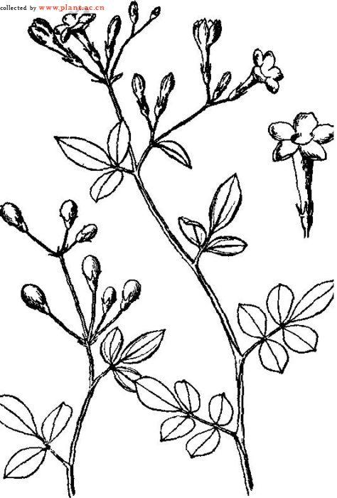 简笔画 设计 矢量 矢量图 手绘 素材 线稿 474_700 竖版 竖屏
