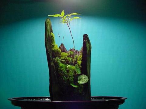 精美的苔藓盆景 - yzq1343079 - yzq1343079的博客